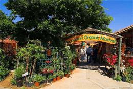 Fresh Local Markets