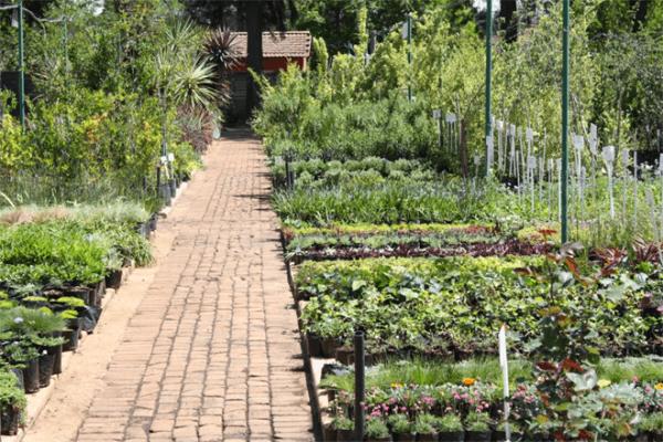 Kazimingi Nursery Farm