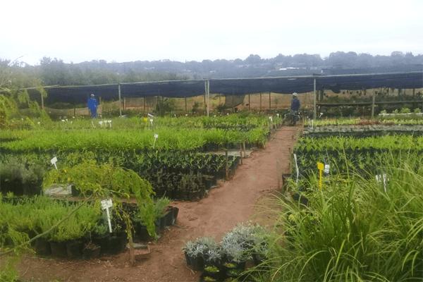 Nursery Plant Services