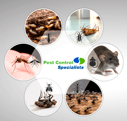 The Specialists - Cleaning & Pest Control