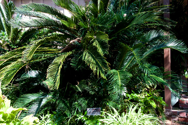 Palms And Tropicals